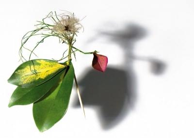фотопроект «КВІТКОВІ ЛЯЛЬКИ»